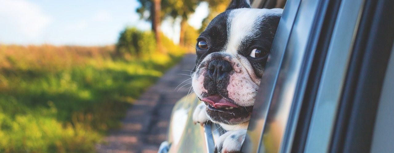 Comment transporter son chien dans sa voiture